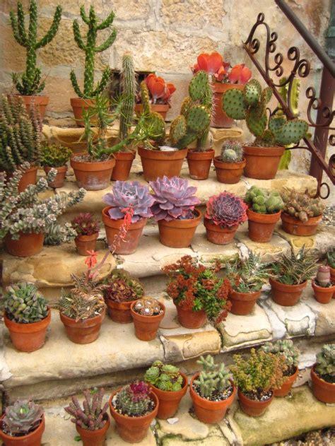 potted cactus garden el camino gardens