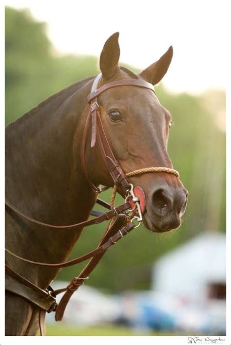 polo horse pony horses thoroughbred ponies names dressage she gear animals most ranch le equine pretty argentina head donkey down