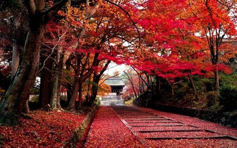 arbres nature de paysages feuilles couleur automne parc