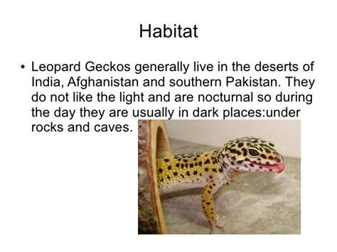 do leopard geckos shed their richard p3 term 2 leopard geckos