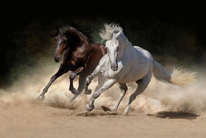 pferde op versicherung fuer andalusier