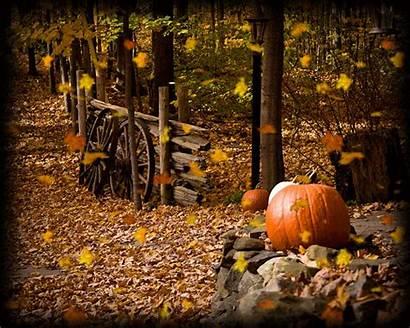 Fall Pumpkins Leaves Pumpkin Scenes Autumn Country