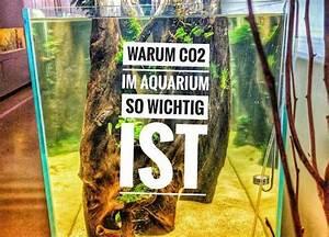 Sauerstoff Im Aquarium : aquascaping berlin alles ber aquascaping in berlin und ~ Eleganceandgraceweddings.com Haus und Dekorationen