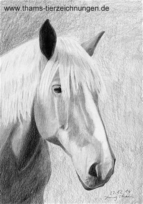thams tierzeichnungen pferdeportraits und zeichnungen