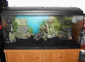 Aquarium Deko Set : riesen aquarium set aquarium 12 wien ~ Frokenaadalensverden.com Haus und Dekorationen