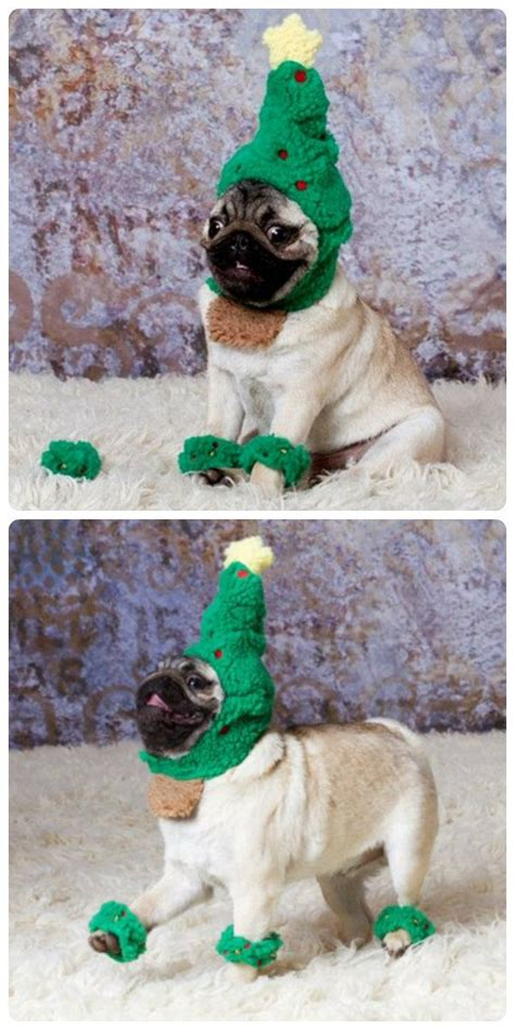 pug christmas tree it s the most wonderful time of the year pug trees and happy