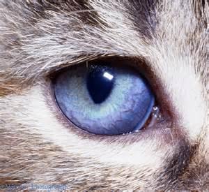 cat s eye cat s eye photo wp05394
