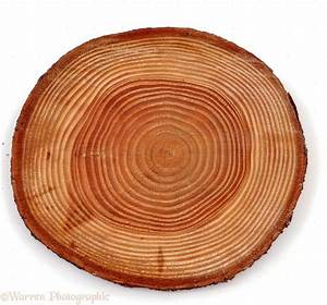 The Beauty Of Growth Rings
