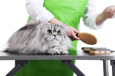 best grooming get the best tips on how to choose a pet groomer