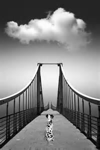 Dalmatian Rainbow Bridge