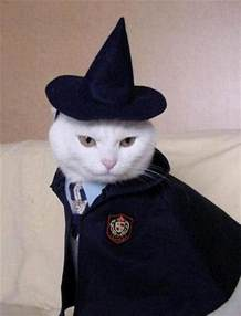 harry potter cat the operacats cats in costumes