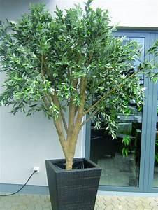 Olivenbaum Im Topf : mammut olivenbaum 250cm 8960 bl tter fr chte ~ Michelbontemps.com Haus und Dekorationen