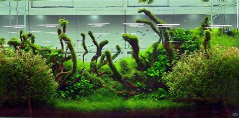 amano aquascape basic forms aqua rebell