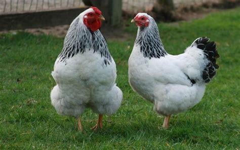 Anasayfa | Mehmet Emin Tavukçuluk | Tavuk Çiftliği