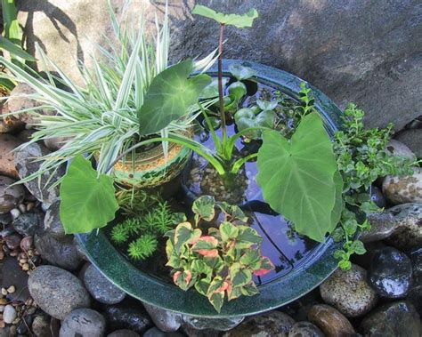 10 refreshing container water features hgtv