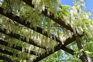 Plante Grimpante Pergola : plantes grimpantes pour abri de jardin et pergolas ~ Nature-et-papiers.com Idées de Décoration