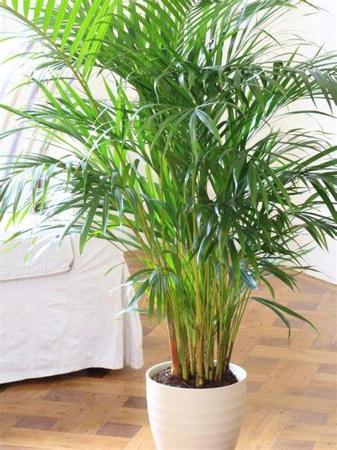 best small indoor plants low light home design indoor plants low light common houseplants