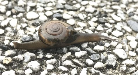 All About Land Snails