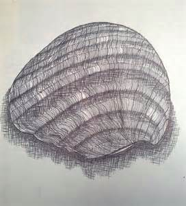 Contour Line Drawing of Seashell