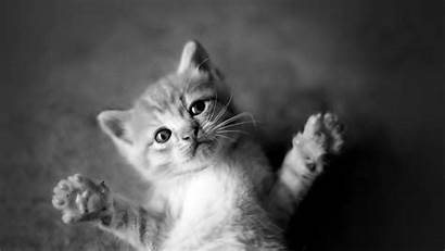 Cat Cats Animals Kittens Animal Grayscale Wallpapers