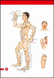 Chinese Foot Chart 4 Acupuncture Human Body Charts With 438 Points Of Body