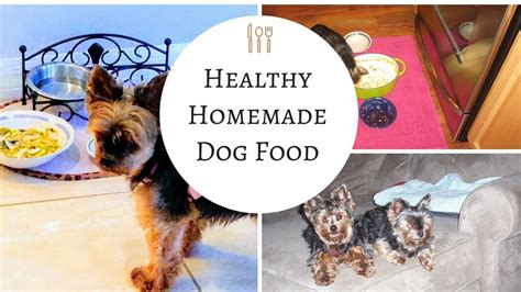 homemade dog food recipe easy   healthy  dogs