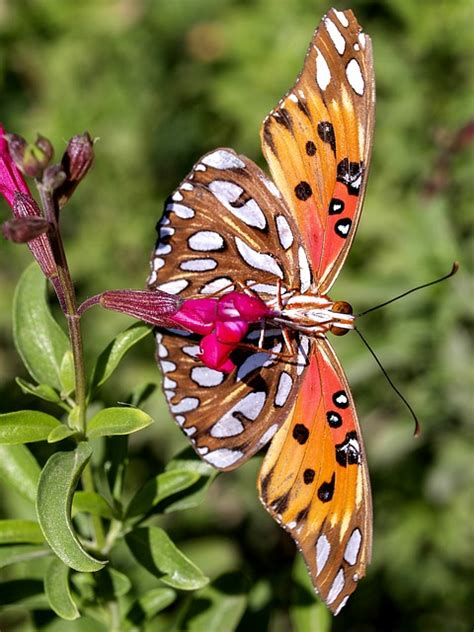 photo colorful beautiful butterfly  image