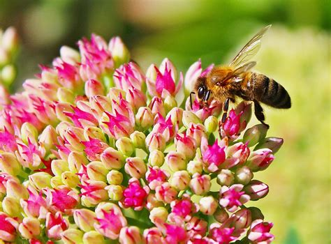 pollinators nothing to sneeze at espoma