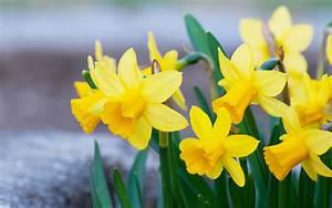 Wie Oft Blumen Gießen : gelbe blumen und ihre bedeutung blog floraqueen deutschland ~ Orissabook.com Haus und Dekorationen