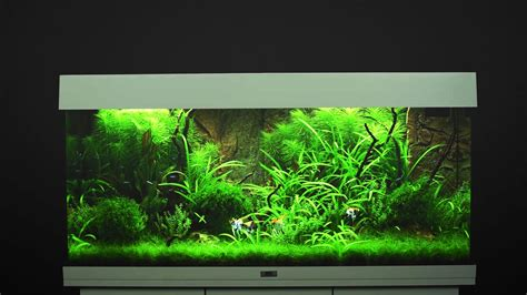je suis absente du bureau aquarium juwel 180 28 images juwel ag 180 led purchase