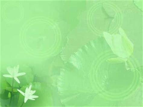 water lily  powerpoint templates