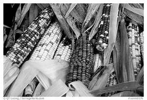 Black And White Corn | www.imgkid.com - The Image Kid Has It!