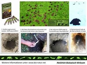 Pflanzen Gegen Maulwürfe : produktanwendung bio natur rauchpatrone gegen w hlm use ~ Watch28wear.com Haus und Dekorationen
