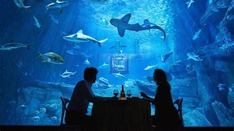 nuit dans un aquarium requin