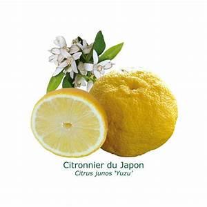 Prix D Un Citronnier : citronnier yuzu citrus yuzu au jardin d 39 agrumes ~ Premium-room.com Idées de Décoration