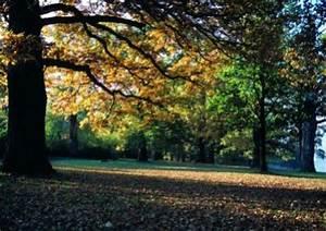 Schnell Wachsende Laubbäume Für Den Garten : wie viele baumarten gibt es ~ Michelbontemps.com Haus und Dekorationen