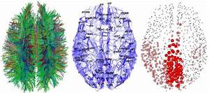 Brain Connections  U2013 Resting State Fmri Functional Connectivity