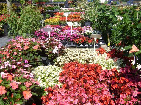 flowers to plant in impatiens for sale ta brandon riverview apollo beach