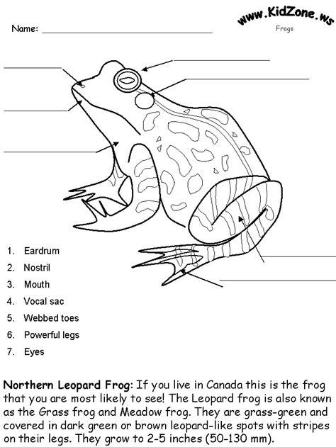 Frog Activity Sheet  Labeling A Northern Leopard Frog (beginner