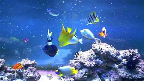 entretien aquarium eau de mer conseil aquarium eau de mer 28 images aquarium eau de mer mon aquarium eau de mer mov