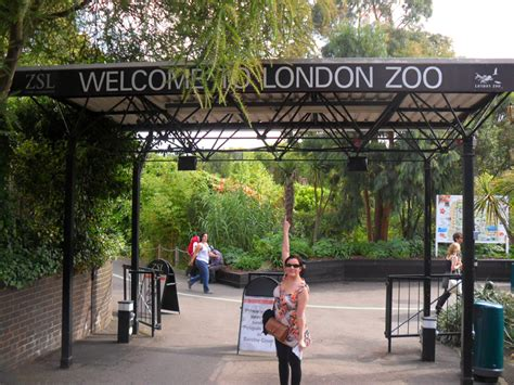 bunkbeds for zsl zoo backpacks and bunkbeds