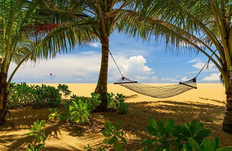 hamak rozwieszony miedzy palmami na plazy