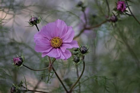 plants flowers  attract butterflies   garden