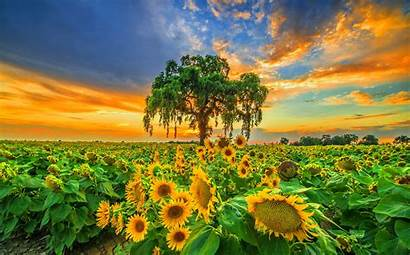 Nature Natural Awesome Desktop Wallpapers Organic Flowers