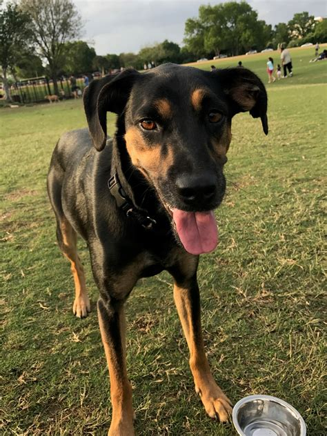 dog training obedience programs austin san antonio tx
