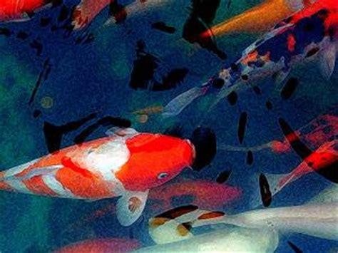 goldfish types  ponds wwwproteckmachinerycom