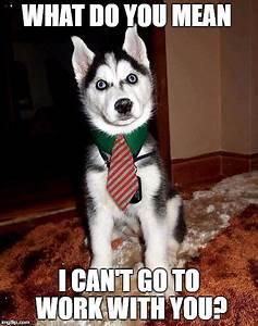 8 Funny Siberian Husky Memes – What Every Dog Deserves