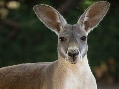 Kangaroo Outback Outpost Zoo