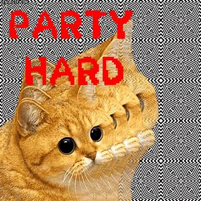 Party Cat Drunk Hard Wasted Gifs Funny