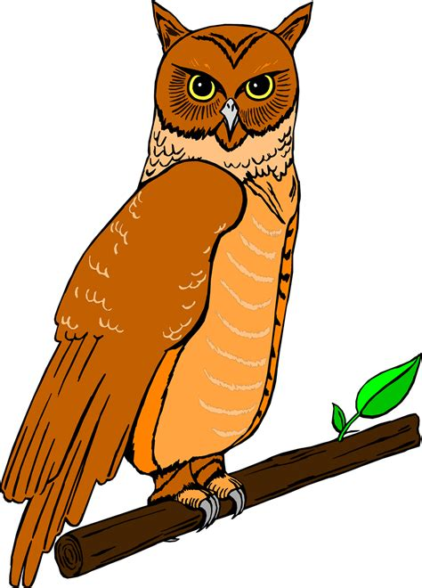 Clip Pictures Owl Free Stock Photo Illustration Of An Owl Perched On